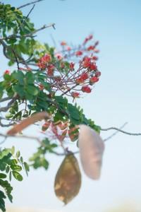 Uhiuhi Flowers and Seed Pods